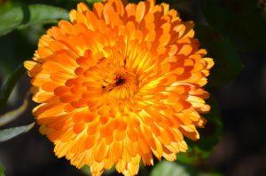 ekstrakty z kwiatów na trądzik